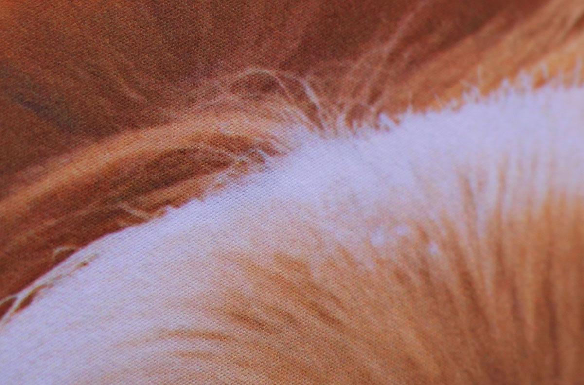 Detalle de la tela estampada, en el se puede apreciar la calidad de la imagen estampada, la textura de la tela y la cobertura sobre el material blanco